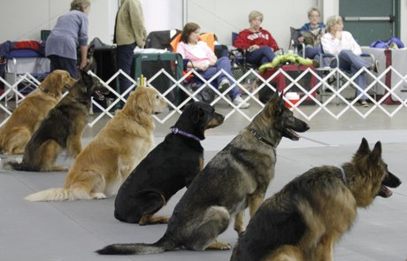 popular introduction to dog obedience competition class