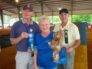obedience training club palm beach county