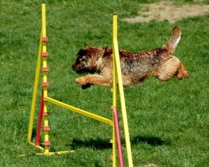 palm beach county dog agility