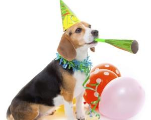dog-celebrating