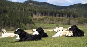 dog-training-schools-3